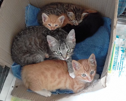kittens looking for home